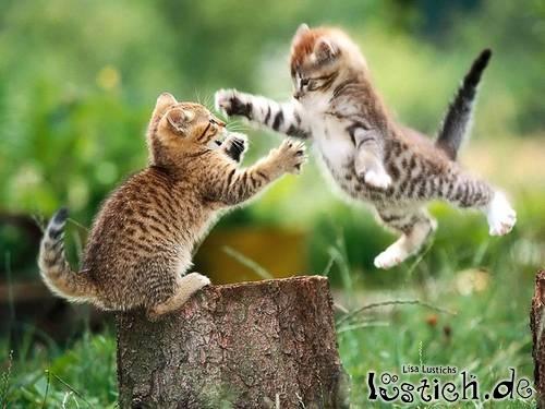 Karate katze