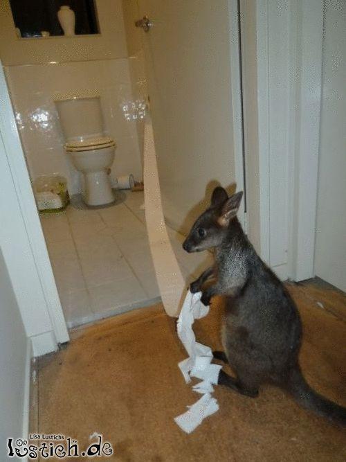 Känguru mit Toilettenpapier