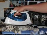 Katze bügeln