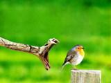 Vogel in Gefahr