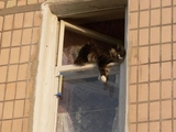 Katze hängt ab