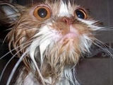 Katze war baden
