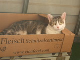 Katzenschnitzel