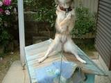 Hund aufn Dach
