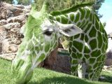 Giraffengrün