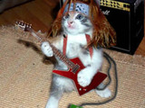 Rock n Roll Katze