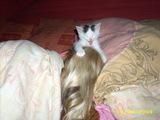 Katzenstreich