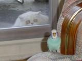 Gierige Katze