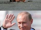 Putin und der Bär
