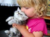 Kind küsst Kätzchen