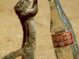 Gib mir mal die flasche