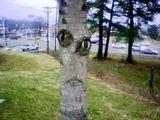 Schräger Baum