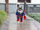 Super-Husky