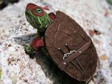 Echte Ninja Turtle