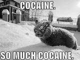 So viel Kokain