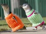Pinguine im Pullover