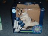 Katze bei Wer wird Millionär