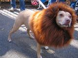 König der Hundis