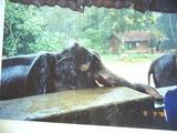 schlafender Elefant
