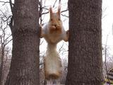Ninja Eichhörnchen