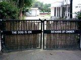 Keine Angst vor dem Hund