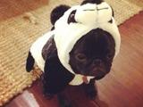 Mein kleiner Panda