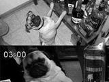 Hundsgeile Party