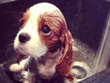 Sein erstes Bad