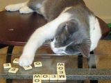 Katzenscrabble