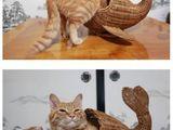 Meerjungkatze
