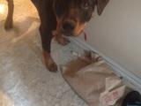 Irritierter Hund