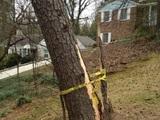 Baum sichern