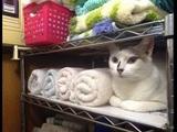 Ein komisches Handtuch
