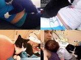 Wahre Katzenliebe