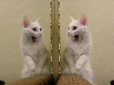 Hübsches Kätzchen