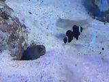 Ein fieser Fisch
