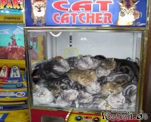 Öffentliche Katzenentnahme