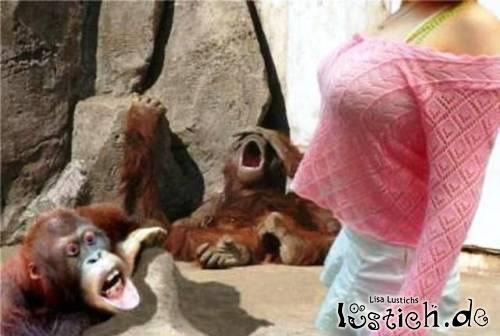 Geiernde Affen