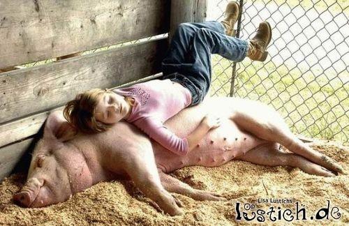 Schweine Schlafplatz