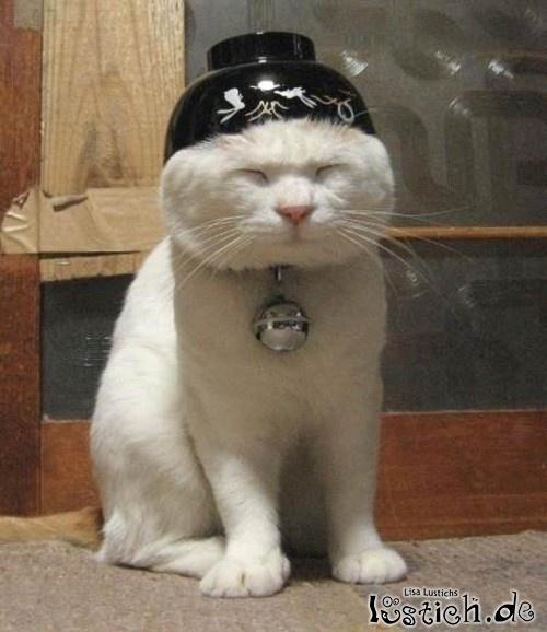 Kung-Fu Katze