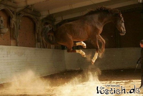 Pferdehochsprung