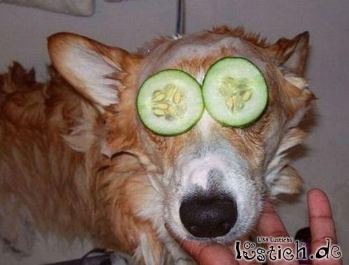 Die Maske füe den Hund