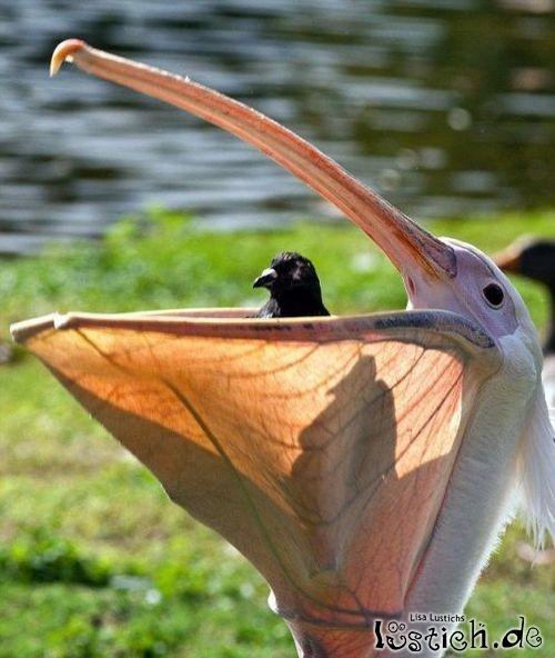 Vogel im Vogel