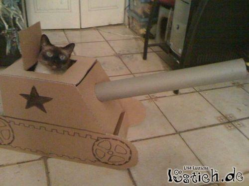 Kitty im Papppanzer