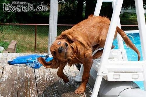 Hund ganz crazy