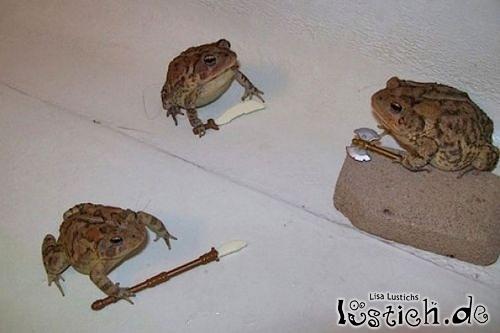 Teenage-Mutant-Ninja-Frogs