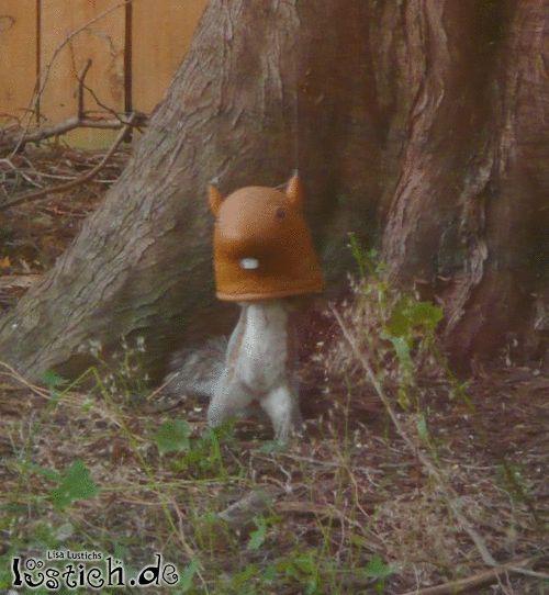 Anonymes Eichhörnchen