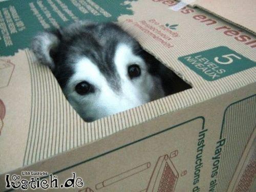 Karton-Hund