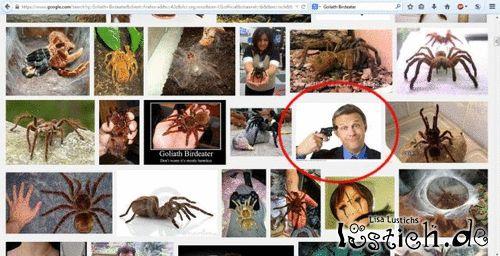 Spinnen googeln