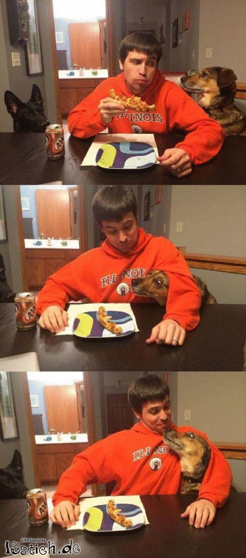 Verfressener Hund